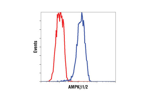 Flow Cytometry Image 1: AMPKβ1/2 (57C12) Rabbit mAb