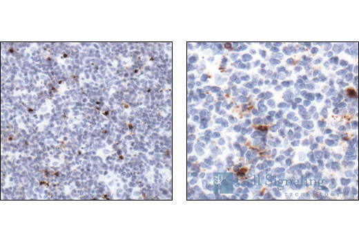 Image 26: β-Amyloid Mouse Model Neuronal Viability IF Sampler Kit