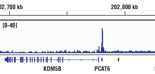 Chromatin Immunoprecipitation Image 1: HIF-1α (D2U3T) Rabbit mAb