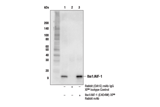 Image 64: Mouse Microglia Marker IF Antibody Sampler Kit