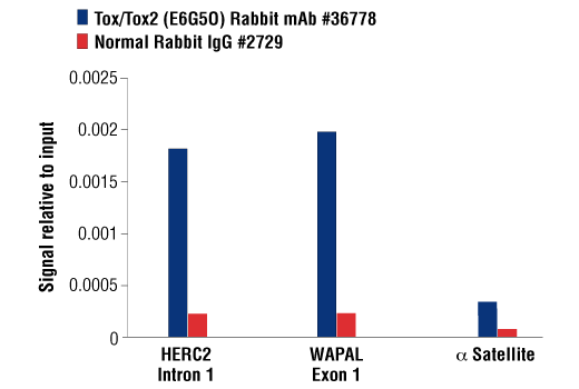 Chromatin Immunoprecipitation Image 1: Tox/Tox2 (E6G5O) Rabbit mAb