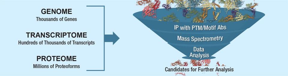 蛋白质组学分析服务